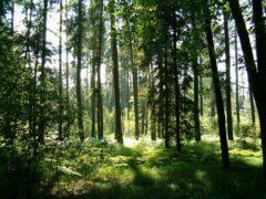 В Усть-Илимском районе заблудился 68-летний грибник из Братска