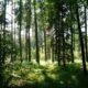 В Выборгском районе в лесу искали заблудившуюся девочку