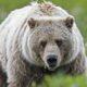 В Польше мужчина подрался с медведем в зоопарке
