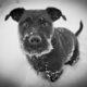 В Екатеринбурге задержан бездомный, грабивший при помощи собаки