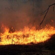В Забайкальском крае горят леса – площадь пожаров увеличивается