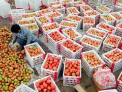 Россия ответила Западу продуктовым эмбарго