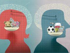 Ученые: Мужчины обладают частью женского мозга