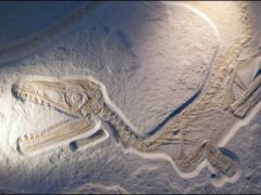 Ученые: На Земле началось массовое вымирание позвоночных