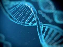 Генетики изучают 3000 ранее неизвестных некодирующих генов