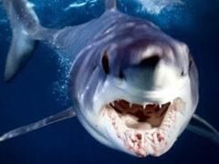 Бывший боксер отбился от акулы, напавшей на него в Австралии