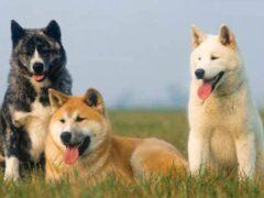 Британские ученые разработали новый IQ-тест для собак