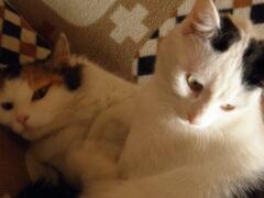 Ученые рассказали, как правильно гладить кошек