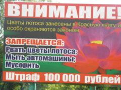 Озеро с краснокнижными лотосами в Приморье очистили от мусора