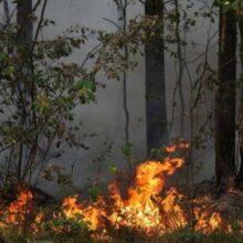 На Дальнем Востоке горят леса