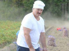 Александр Лукашенко решил ломать управление в сельском хозяйстве