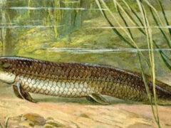 В Африке нашли рыбу, которая может жить без пищи и воды несколько лет