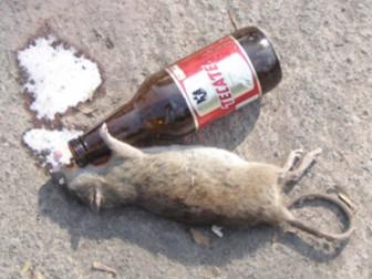 крыса алкоголь