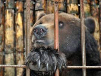 медведица зоопарк