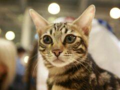 Кошка Нитама заняла пост смотрителя на японской станции Киси
