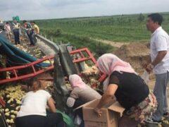 Тысячи цыплят сбежали из перевернувшегося грузовика в Китае