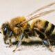 В Перми установят самый большой в России памятник пчеле