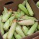Шотландия первой в ЕС запретит выращивание продукции ГМО на своей территории