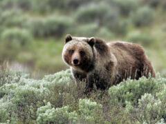 Приморье: автоинспектор застрелил брата вместо медведя