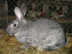 Ставропольцы украли и съели чужих кроликов