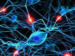 Ученые: пересадка стволовых клеток может вызвать рак