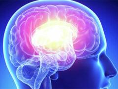 Ученые: Мозг успешных людей имеет особое устройство