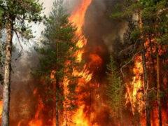 Российский ученый объяснил пожары в Сибири влиянием Юпитера