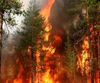пожары на территории Сибири