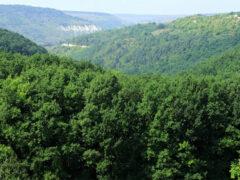 Россия занимает первое место по числу деревьев на Земле