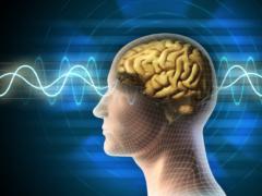Биологи научились управлять работой мозга при помощи ультразвука