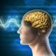 Ученые обнаружили область мозга, отвечающую за наказание