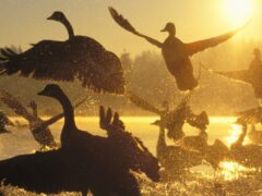 Ученые выяснили, как птицы выбирают место для отдыха во время миграции