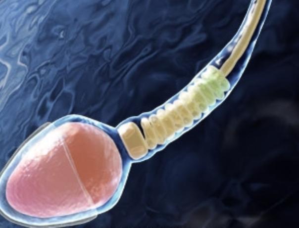 vitekayushaya-sperma-smotret-onlayn