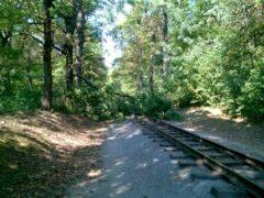 В Минской области из-за упавшего дерева на час задержали семь поездов