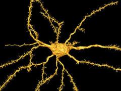 Ученые: Нейроны заставляют самцов предпочитать секс еде