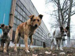 В Твери стая собак покусала детей во время урока физкультуры