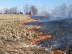 Рослесхоз: поджигателям травы может грозить уголовная ответственность