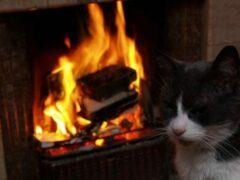 В Полоцке кот спас семью от гибели на пожаре