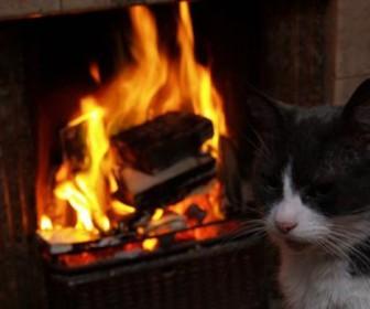 кот огонь пожар