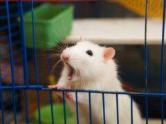 В Петербурге животные погибли в залитом кипятком зоомагазине