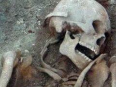 Гигантские скелеты из Эквадора отправлены на экспертизу