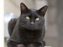 В Красноярске 60 кошек остались без попечения хозяйки