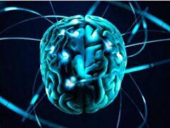 Ученые выяснили, чем мозг человека отличается от мозга обезьяны