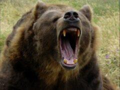 Медведь напал на охотника в Хабаровском крае