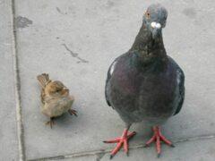 В Петербурге автомобиль сбил двух пенсионеров, кормивших голубей