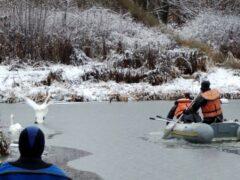 В Москве на Троекуровском пруду спасли неразлучную пару лебедей