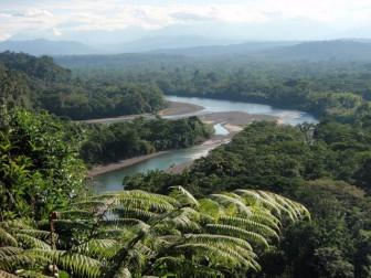 лес Амазонки