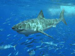 Ученые установили, почему рыбы становятся невидимыми в открытом океане