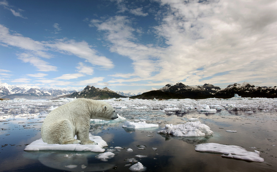 antarctica polar bears global warming essay