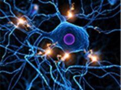 Учёные: объём памяти человека в 10 раз больше, чем считалось ранее